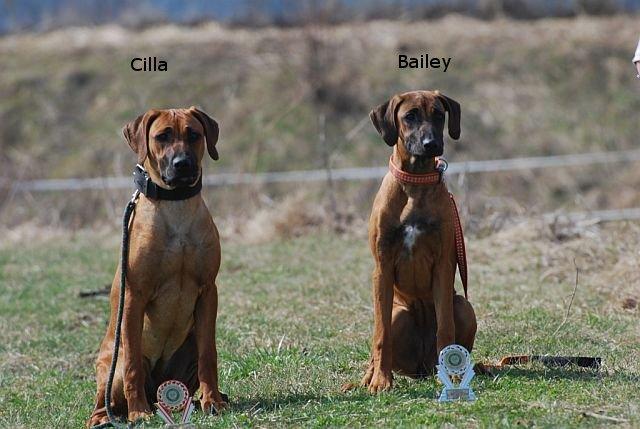 Cilla a Bailey